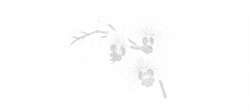 how to start shading orchid petals