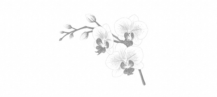 how to color in grayscale orchid