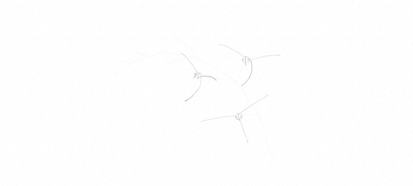 how to draw orchid structurally