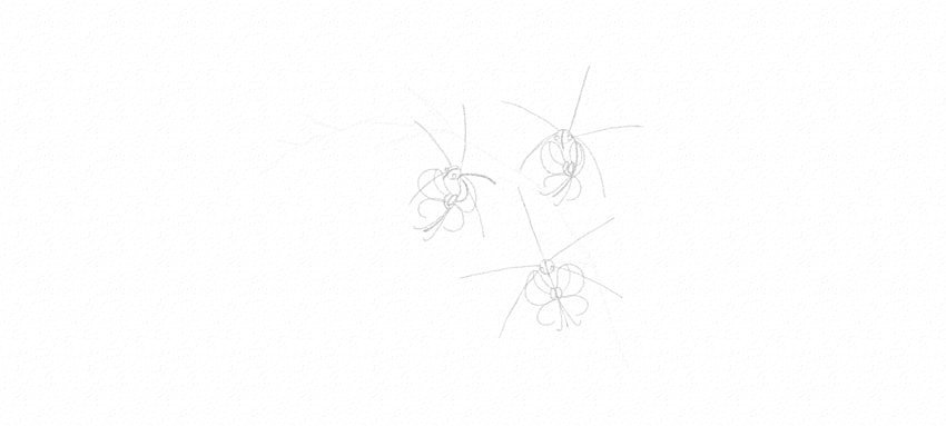 how to draw orchid inner petals