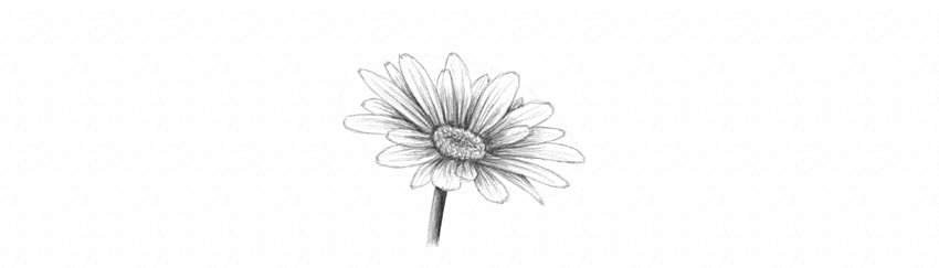 how to shade daisy petals dark