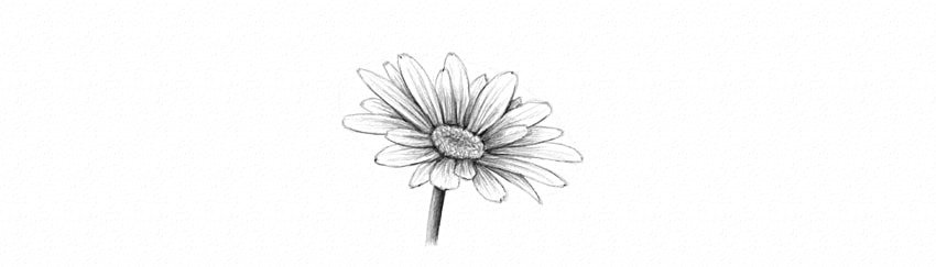 how to draw and shade daisy simple flower