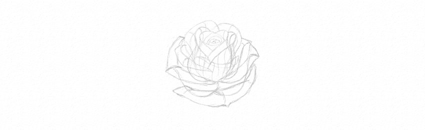 how to sketch rose petals