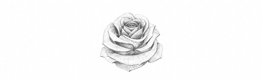 how to shade a white rose