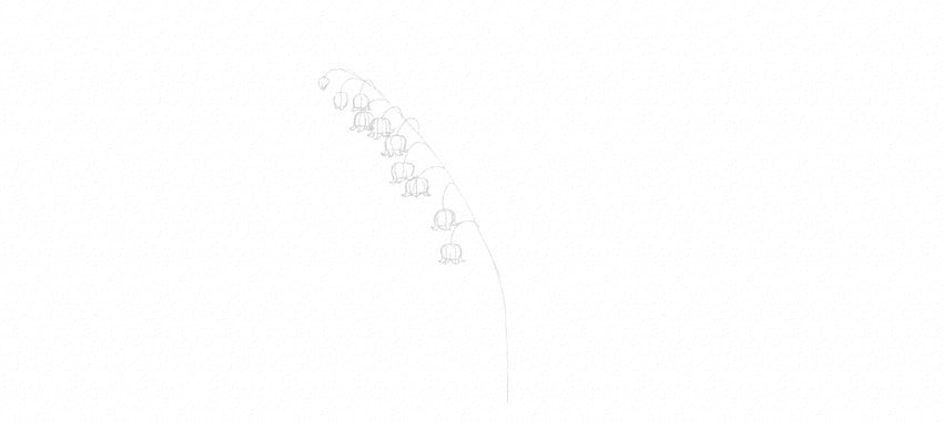 lily of the valley petals drawing