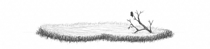 how ro draw grass field with pencils