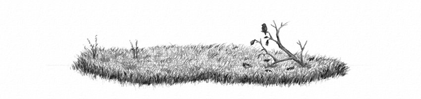 how to draw grass quickly