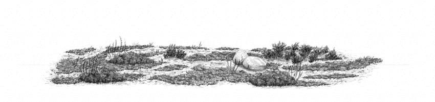 how to draw realistic semi dry desert ground