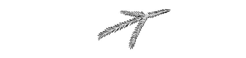 how to draw medium spruce needles