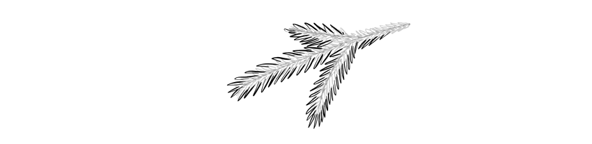 how to draw a spruce branch