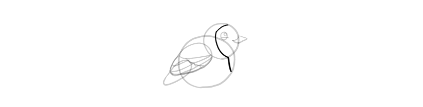 how to draw simple robin