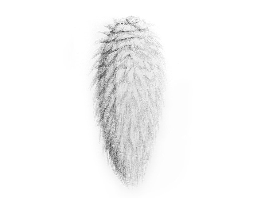 drawing fur with pencils