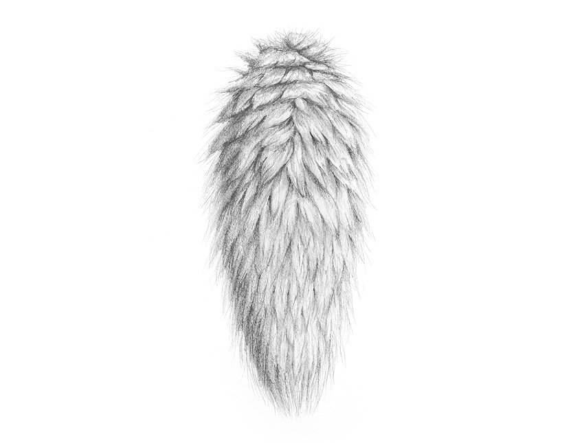 how to draw fluffy tail