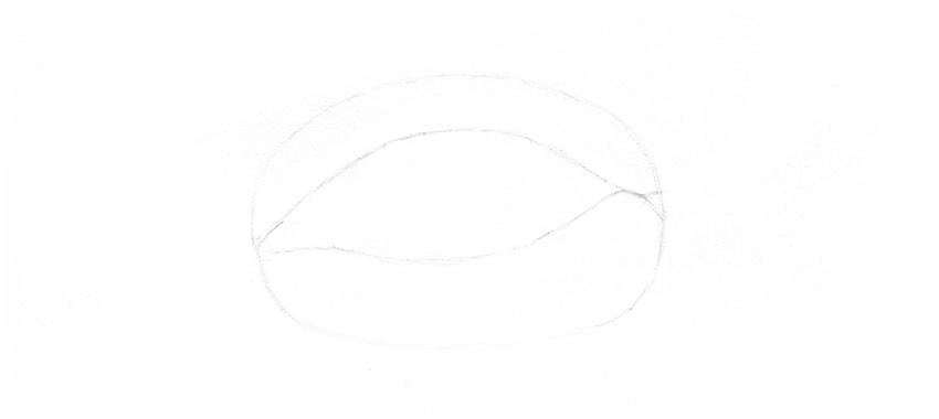 lower eyelid outline