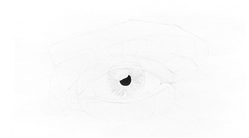 how to draw fibers in eye