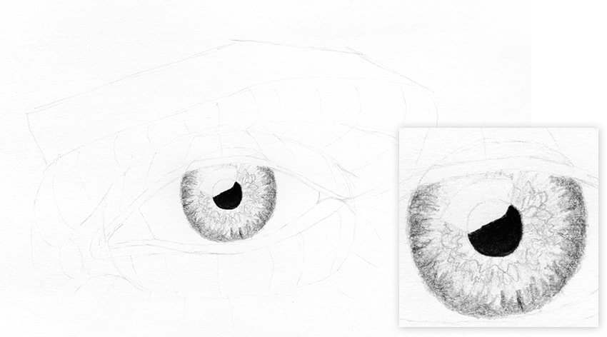 eye outline