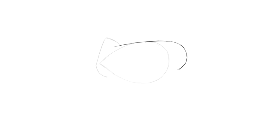 lion rump drawing