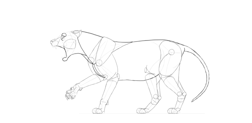 lion body drawing