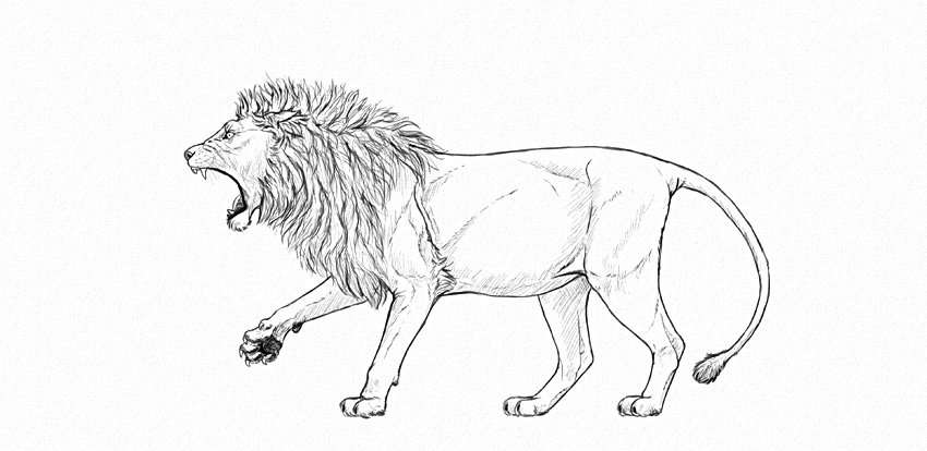 lion drawing step by step