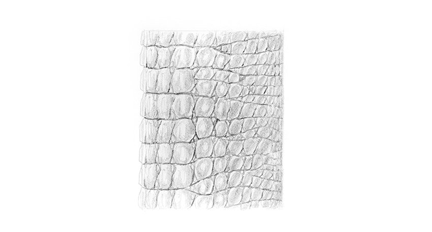 reptile scales drawing