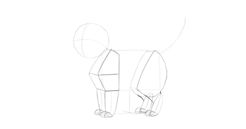 cat hind leg drawing