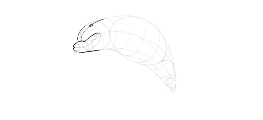 dolphin head details
