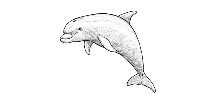 dolphin dark outline