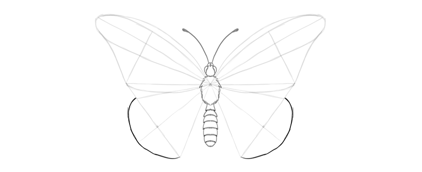 butterfly lower wing outer margin