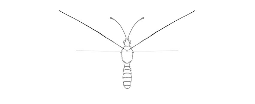 butterfly upper wings diagonal