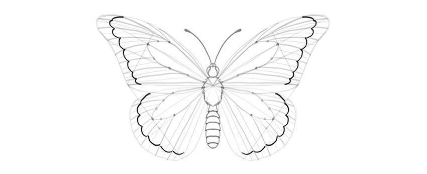 butterfly outer margin shape