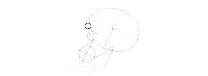 drawing skull brow