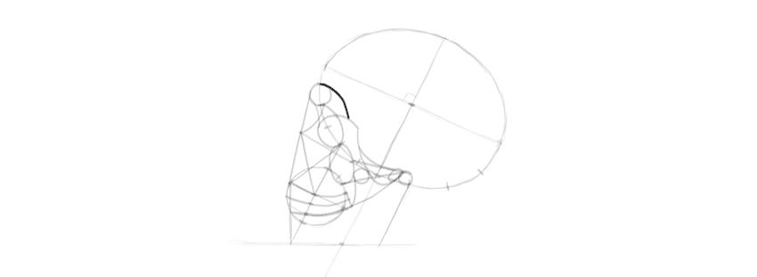 drawing skull eye socket brow