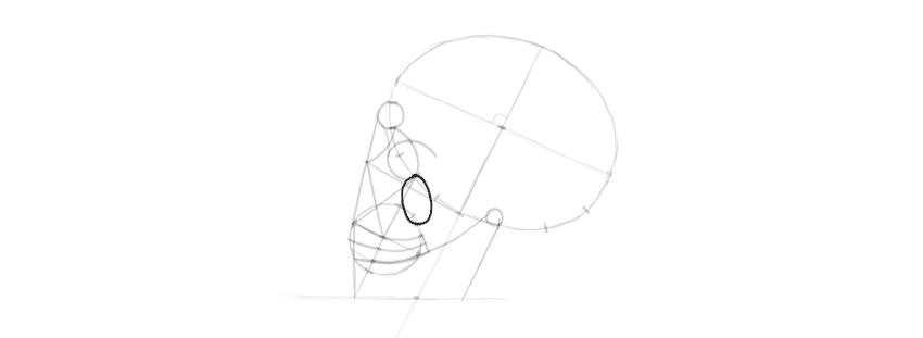 drawing skull zygomatic bone