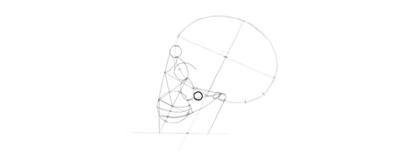 drawing skull details of cheek bone