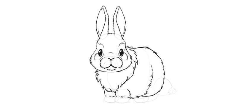 bunny fluffy body