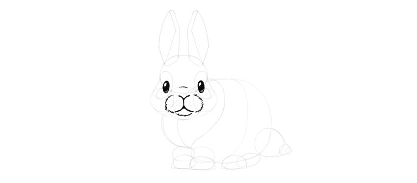 bunny muzzle detail