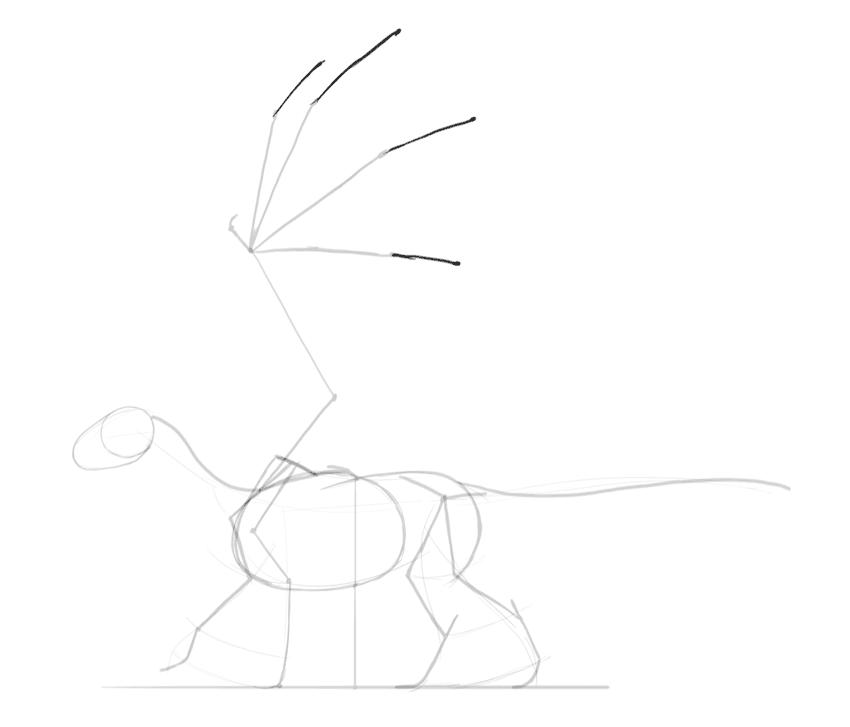 dragon wing fingers anatomy