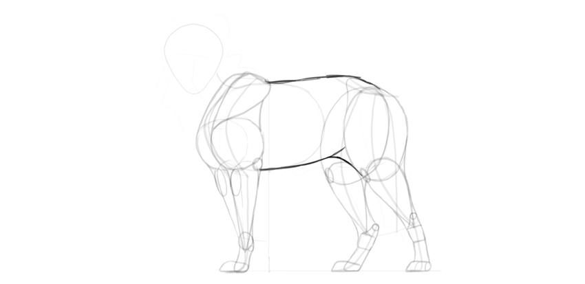 wolf drawing main body