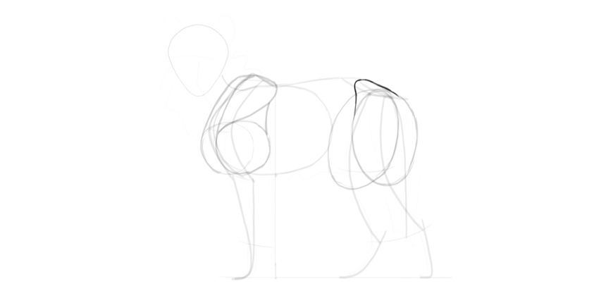 wolf drawing hips muscles