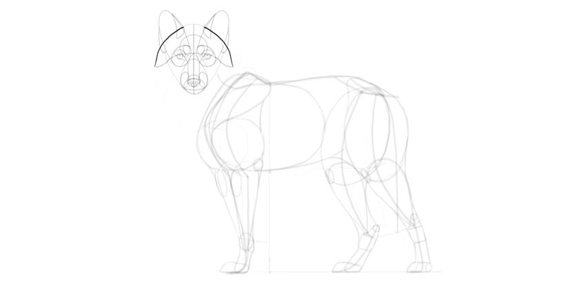 wolf drawing ear fluff