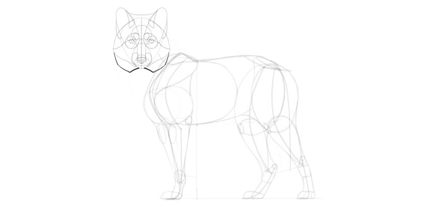 wolf drawing ruff
