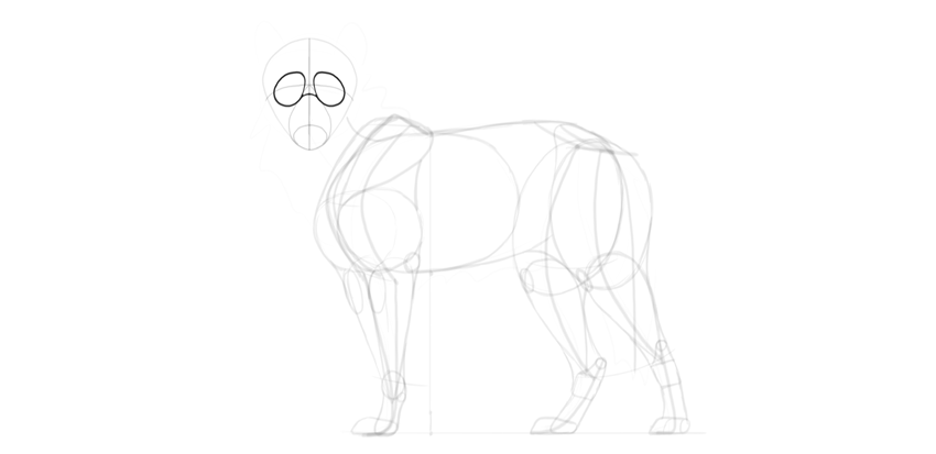 wolf drawing eye sockets