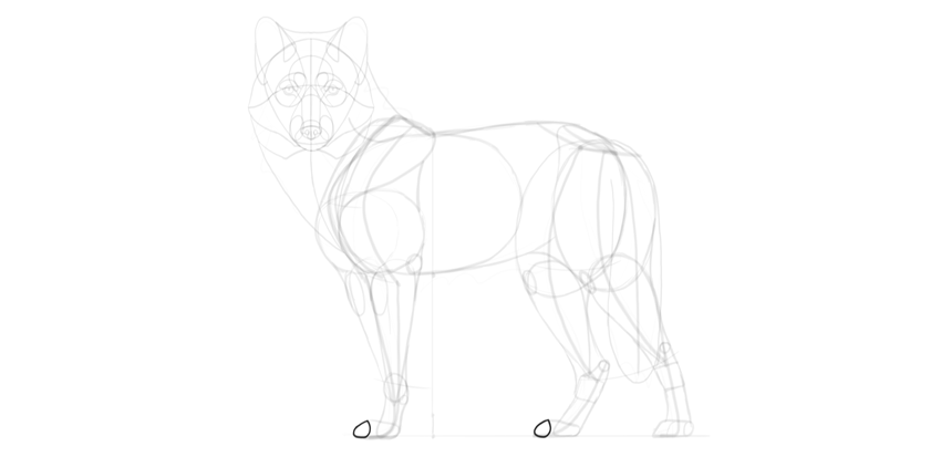 wolf drawing middle toes