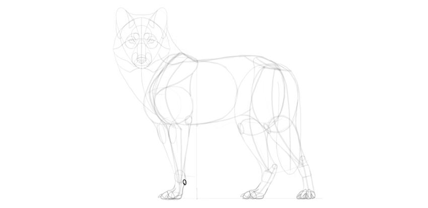 wolf drawing carpal pad