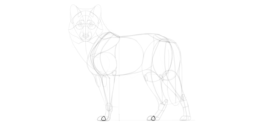 wolf drawing outer toes