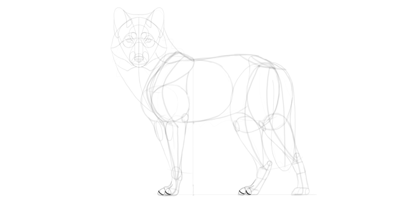 wolf drawing paw pads