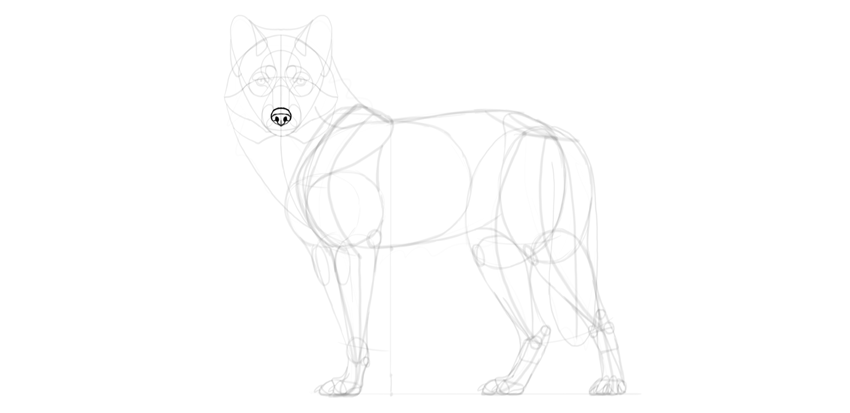wolf drawing nose details