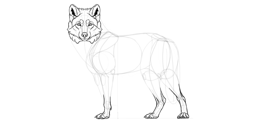 wolf drawing feet details