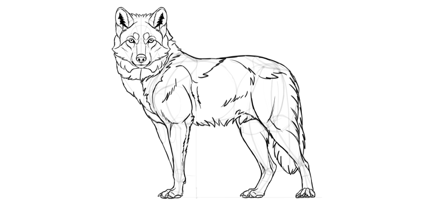 wolf drawing fur details