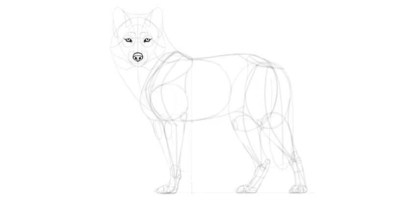 wolf drawing eyes dark outline